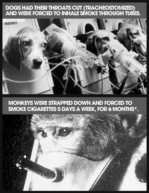Tobacco companies have conducted cruel experiments on animals to try to prove that tar, nicotine, and other cigarette ingredients aren't dangerous to people. Their own studies proved them wrong. But, they still lied, killing and discarding countless animals. source
