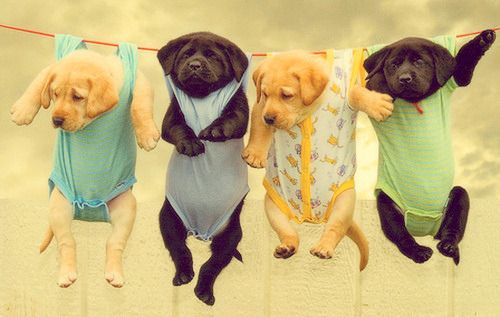 hope-for-snow:  lawl lookit all the puppies xD <3