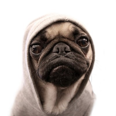 Those pug thugs are everywhere these days…