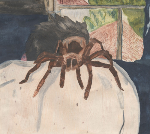 A TARANTULA, A BACK, A WINDOW watercolor pencil on paper Johnnie JungleGuts