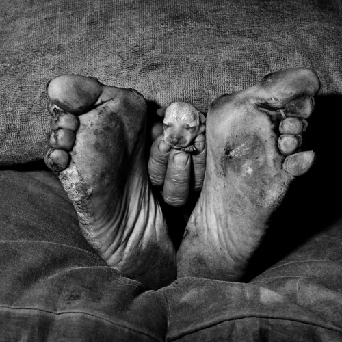 "firsttimeuser:  Roger Ballen. ""Puppy between feet,"" 1999, ""Outland."" series.."