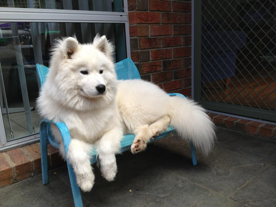 Omg a Joe dog! I had a dog when I was growing up, a samoyed husky, named Joe. Sweetest dog ever.