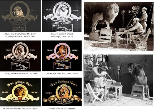 MGM logo making of :)