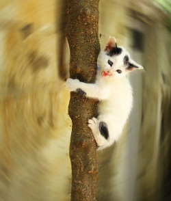 Scared kitten by jimiliop on Flickr.