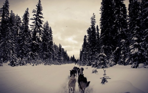 ohdann:  Dog sledding- Lake Louise 2012