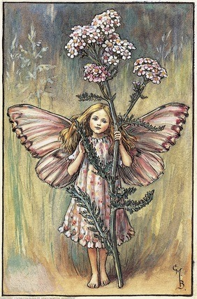 Yarrow Fairy A girl fairy stands facing front holding a yarrow flower.