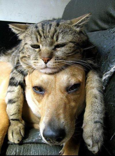 Why is it so adorable when dogs tolerate cats? I don't know, but I love it when they do.