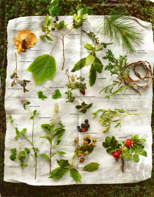 good4youherbals:  beautiful wild edibles spread from a martha stewart magazine