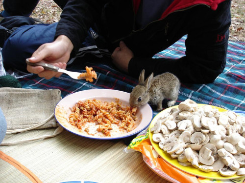 iz kyoot:  a rabbit eating pasta  画