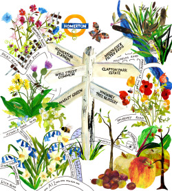 This is a poster I have created for The Friends of Homerton station, a charity that fills wasted urban spaces with flower meadows and other nature projects in Hackney. They are offering a guided walk in March click here to find out more