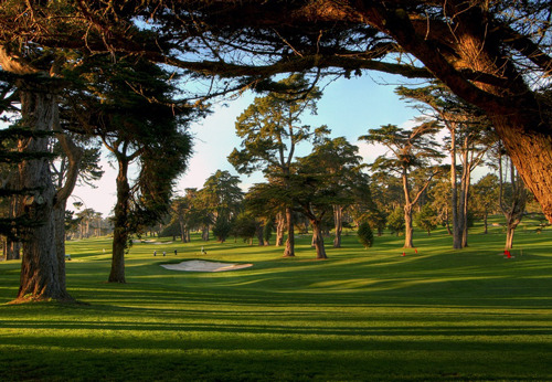 golftraveller57: more great City Golf at TPC Harding Park Golf Course, San Francisco, California