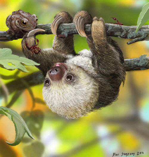 theslowasssloth:  Nature's Kawaii, Baby sloth by *Psithyrus ©2011-2012 *Psithyrus