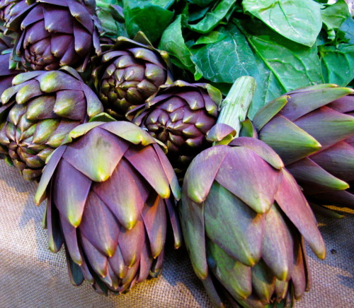 artichokes @ borough market