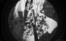 Tree In The City Double Exposure Fish Eye 35mm Junior Workshop Alternative Camera Project