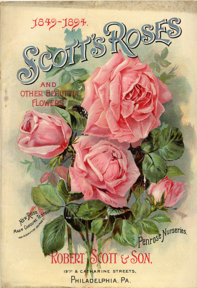 in-the-middle-of-a-daydream:  Robert Evans & Co., Scott's Roses and Other Beautiful Flowers, 1894