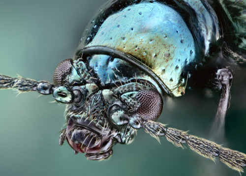 ianbrooks:  Insect Family Portraits by Matthias Lenke Matthia' high magnified photography captures the cheeky visages of the insectoid kingdom's many family members. Look at those smiles! Such beautiful mandibles and probosces! Check out more creepy crawlies at Matthias' flickr.