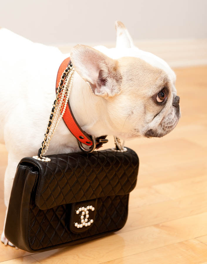 Not sure what can ever top this animal feature on The Coveteur today…