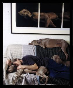 Portrait by Abe Frajndlich Wegman and his weimeraners in NYC, 2005