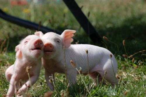 Pigs from Brightside Farm Sanctuary frolicking is like a VALENTINE TO MY HEART. I love you, rescued piglets. I love you so much that there isn't enough room in my heart to contain my love and it must spill out onto my face in the form of smiling like a g-d idiot. HAPPY VALENTINE'S DAY TO EVERYONE EVERYWHERE!!! Also, if you want to dramatically up the awesomeness of your viewing experience, listen to this. Whitney vs. Robyn, the two best bitches of all time. I've been staring at this photo and chair dancing for the last hour. Bosses, fire me immediately.