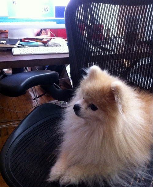 topherchris:  I've been replaced.  Tommy takes over topherchris' desk.