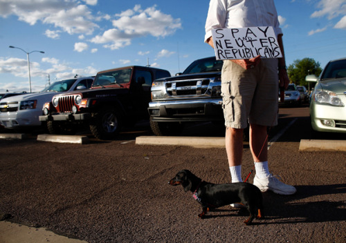 Speaking of Dogs Against Romney…. A weenie dog showed up to protest Mitt Romney's event in Mesa, Ariz., Monday (Photo by Eric Thayer/Getty Images)