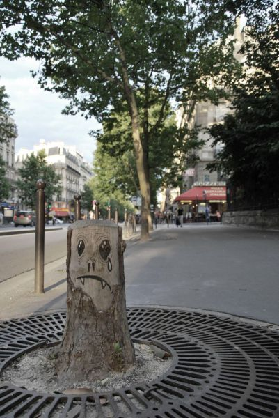 robotindisguise:  Sad Stump