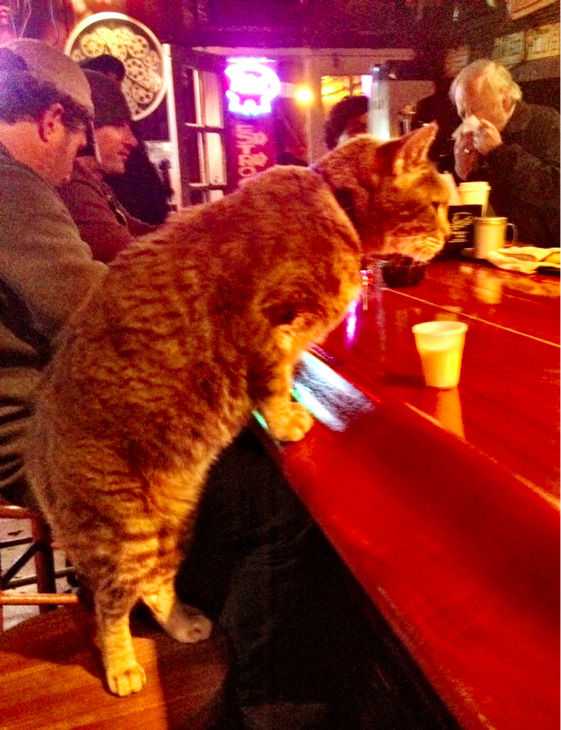 laughingsquid:  Mr. Wu the Cat Getting Served at a New Orleans Bar  thats awesome!!