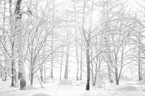 preclude:  snowy trees (by jollila)