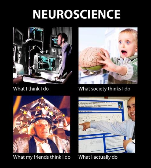 fuckyeahneuroscience:  (submitted by deriso, thanks!)