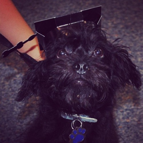 Graduate 2012! (Taken with instagram)
