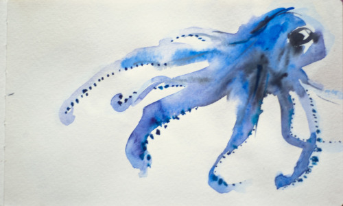 eatsleepdraw:  octopus. watercolour, moleskine