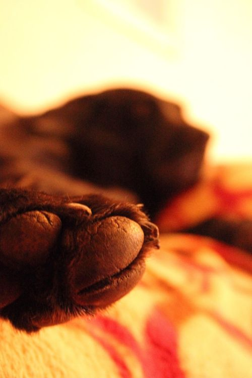 "PHOTO OF THE DAY 05/02/2012  ""Paw"""