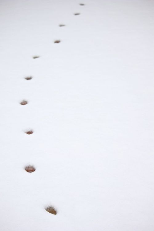 "PHOTO OF THE DAY 13/02/2012 ""Paw Prints"""