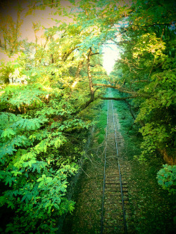 Misterious railway by lua_soleil on Flickr.