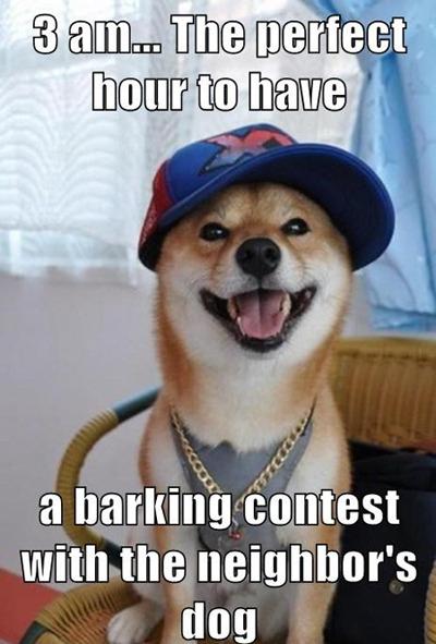 scumbag dog[via]