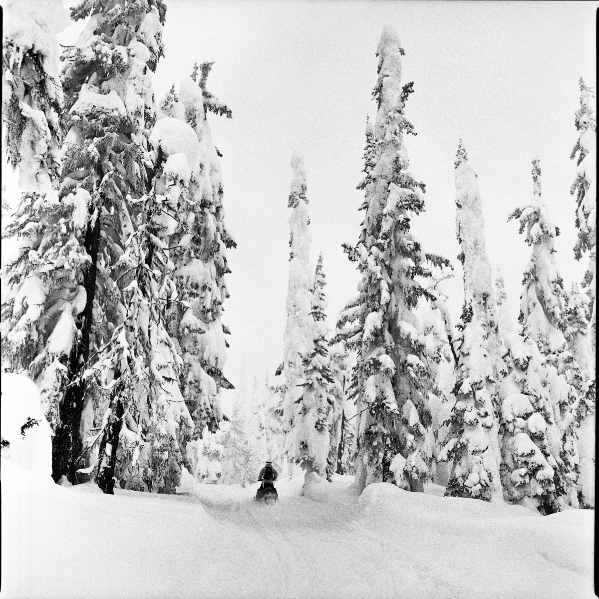 The best part about sledding- EXPLORATION of NEW ZONES  Eric Jackson_Revelstoke, BC_  Photo:  NOMADDA