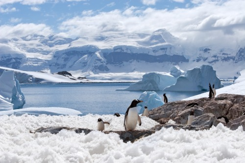 "Penguins, snow, and a whole lot of adventure. Antarctica is one place all you ""thrill-seekers"" must go!   I've also heard that playing with a penguin is a pretty great afternoon activity."