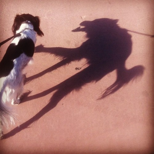 cute dog, creepy shadow  画