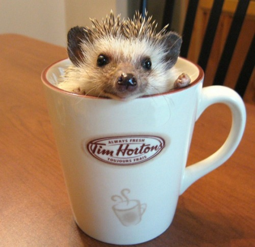 Somebody Spiked the Coffee! via:cuteoverload