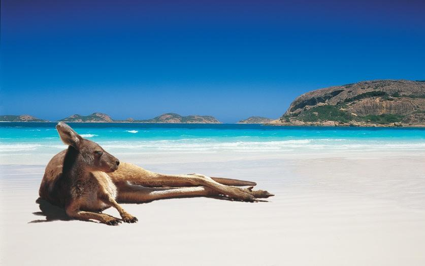 llbwwb:  Lucky Bay, Australia by Ken Brokstein   Chillin like a villain