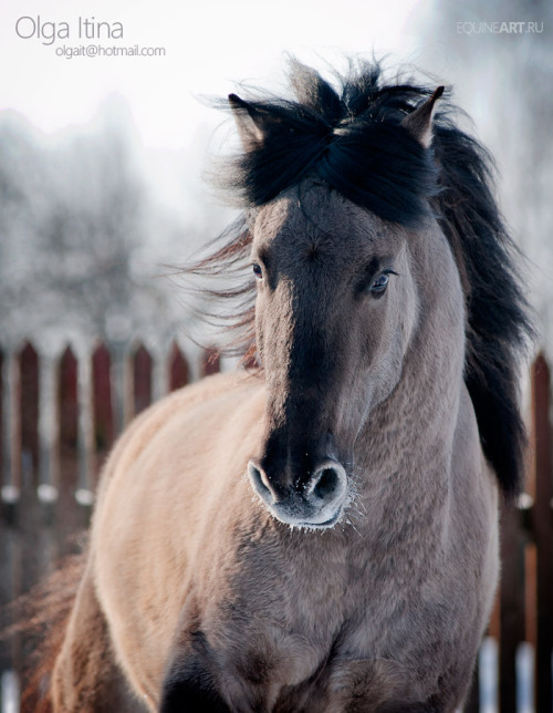 llbwwb:  For the Horse Lovers :) by Olga5