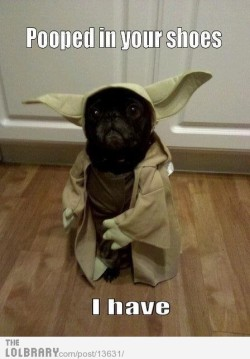 thelolbrary:  LOL Yoda Follow this blog for the best new funny pictures every day