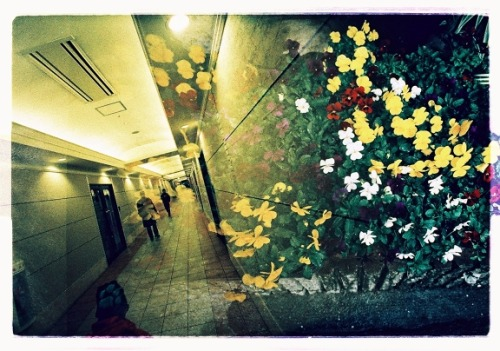 lomographicsociety:  Lomography Camera of the Day - Lomo LCA+RL