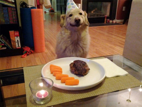 HELLO. THIS IS DOG DINNER.