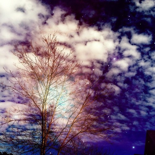 'trippy in his basement' #photography #nature #trees #branches #sky #stars #clouds #sun #instagram #tumblr