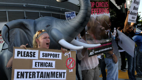 Bullhooks used on circus elephants in Atlanta despite county banFulton County banned bullhooks in June, but a superior court judge overruled the ban for the Ringling Brothers and Barnum & Bailey Circus. Bullhooks are tools with long handles and a sharp hook at one end that allows trainers to apply varying degrees of pressure to sensitive spots on an elephant's body. Circuses say the tools are necessary for the safe handling of elephants, but critics say bullhooks are harmful to the animals.