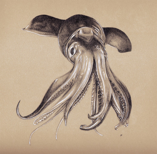 laurahines:  Finished Squid Sketch #1 Graphite and Color Pencil on BFK Rives