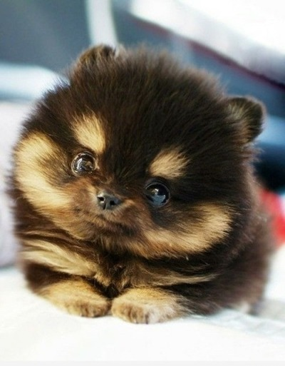 Oh my goodness is this even real?? This little animal is soooo cute!!