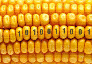 Tell USDA not to approve 2,4-D-resistant corn Dow and USDA hope to quietly approve a new genetically engineered seed line that basically swaps RoundUp (glyphosate) out and an even worse weedkiller (2,4-D) in. We don't have much time to stop this.  With superweeds and superbugs emerging all over the country, Monsanto's RoundUp Ready strategy of stacking seeds with herbicide-resistant and pesticide-producing traits is fast coming apart. Farmers across the Midwest and South are losing their fields to superweeds so formidable and fast-spreading that they break farm machinery, disrupt irrigation and more. But instead of abandoning a losing strategy, Dow is trying hard to get us all running faster on the same broken pesticide treadmill.  Tell USDA that you want off this ride. USDA opened a public comment period over the holiday break, as the Agency tends to do for controversial decisions they want to bury. But we're paying attention. Dow aims to get 2,4-D-resistant corn to market this year, soy next year and cotton in 2015. Now is the time to say no. Genetically engineered, herbicide-resistant seeds are the growth engines of the pesticide industry's market strategy. Blocking their release into the marketplace enables us to head the pesticide industry off at the pass. More to the point, keeping 2,4-D resistant seeds in the bottle — and relying on 21st century ecological science and practice rather than WWII-era chemicals — gives us a chance to jump off the pesticide treadmill and protect ourselves from the suite of human health effects associated with 2,4-D: reproductive toxicity, endocrine (hormone system) disruption and cancer. Please sign this petition to USDA urging the agency to say no to Dow's 2,4-D corn.