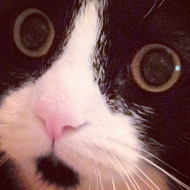 #otto #cute #cat #face #kawaiiiiii (Taken with instagram)